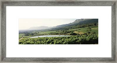 Vineyard With Constantiaberg Mountain Framed Print by Panoramic Images