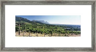 Vineyard With Constantiaberg Range Framed Print by Panoramic Images