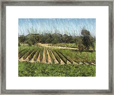 Vineyard With Oak Framed Print by Bud Anderson