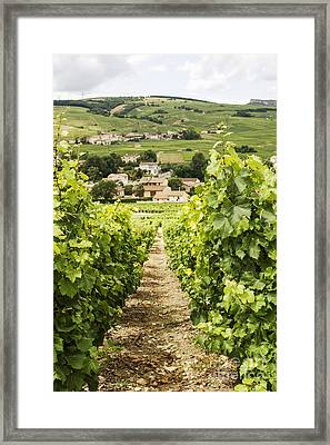 Vineyard With View On Burgundy Village Framed Print by Patricia Hofmeester