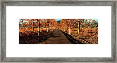 Vineyards Along A Road, Beaulieu Framed Print by Panoramic Images
