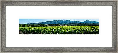 Vineyards Along D27, Vaugines Framed Print by Panoramic Images