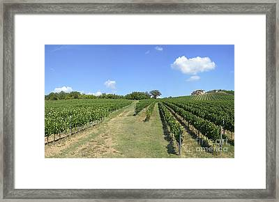 Vineyards And Hills In Chianti Framed Print