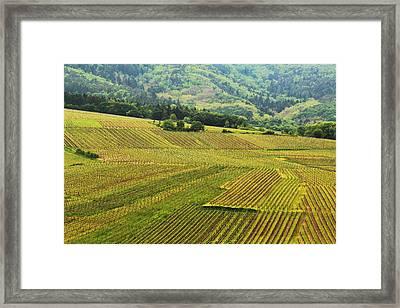 Vineyards Below Zellenberg France 1 Framed Print by Greg Matchick
