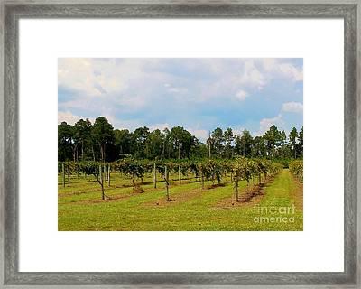 Vineyards Framed Print by Eloise Schneider