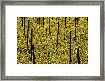 Vineyards Full Of Mustard Grass Framed Print by Garry Gay