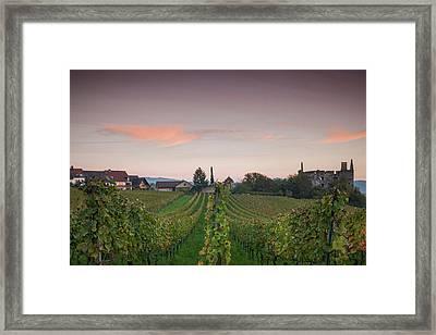 Vineyards In Autumn At Dusk Framed Print