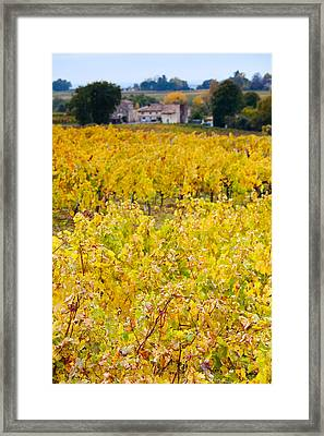 Vineyards In Autumn, Montagne, Gironde Framed Print