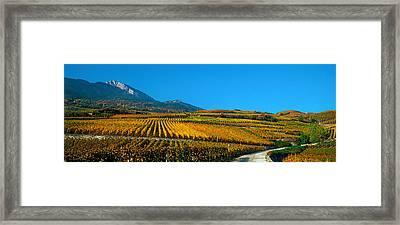 Vineyards In Autumn, Valais Canton Framed Print