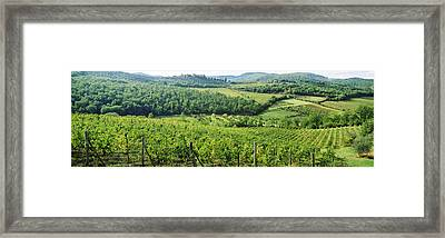 Vineyards In Chianti Region, Tuscany Framed Print by Panoramic Images