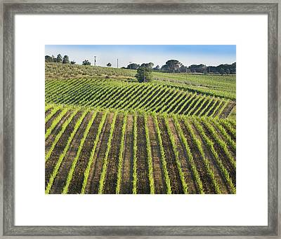 Vineyards In The Chianti Region Framed Print