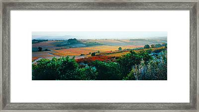 Vineyards In The Late Afternoon Autumn Framed Print by Panoramic Images
