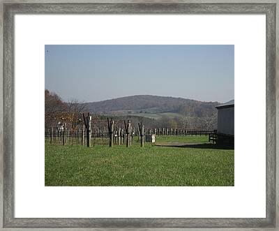 Vineyards In Va - 121229 Framed Print