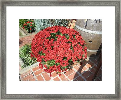 Vineyards In Va - 121247 Framed Print by DC Photographer