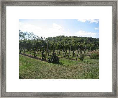 Vineyards In Va - 121251 Framed Print