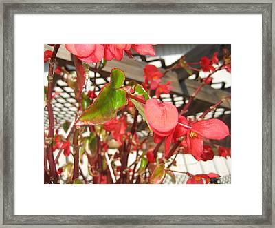 Vineyards In Va - 121252 Framed Print