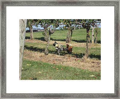 Vineyards In Va - 121253 Framed Print by DC Photographer