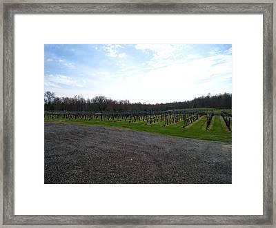Vineyards In Va - 121267 Framed Print by DC Photographer