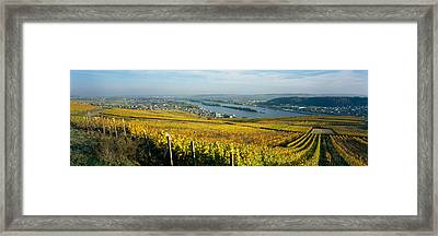 Vineyards Near A Town, Rudesheim Framed Print by Panoramic Images