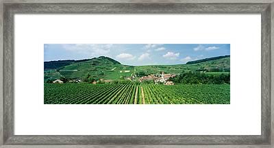 Vineyards Near A Village, Oberbergen Framed Print