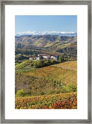 Vineyards, Near Alba, Langhe, Piedmont Framed Print by Peter Adams