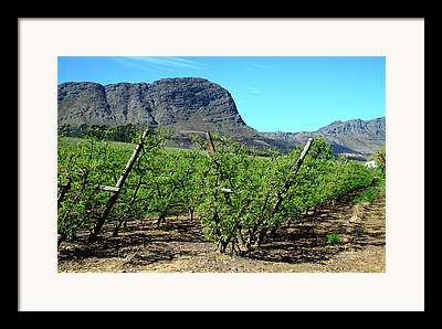 Western Cape Framed Prints