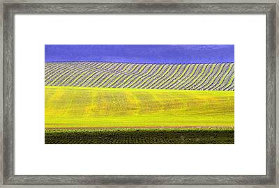 Vineyards Framed Print by Rebecca Cozart