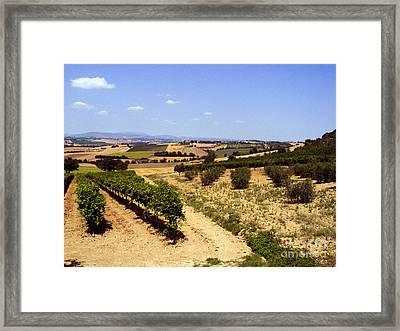Vineyards Framed Print by Tim Holt