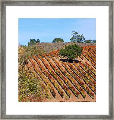 Vineyards Framed Print