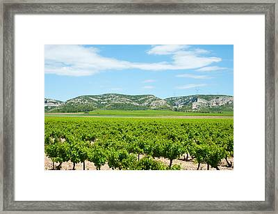 Vineyards With Hills In The Background Framed Print by Panoramic Images
