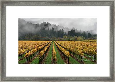 Vineyard Russian River Wine Country Sonoma County California Framed Print by Wernher Krutein