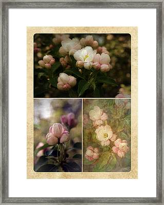 Vintage Apple Blossoms Collage Framed Print by Mary Machare