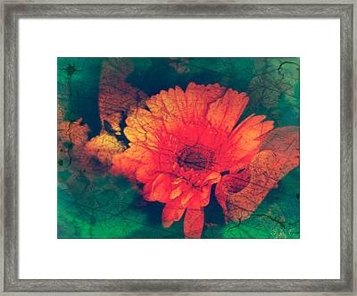 Vintage Aster Framed Print by Sherry Flaker