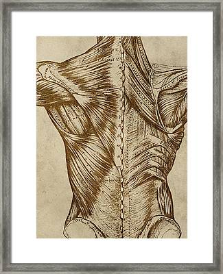 Vintage Back Anatomy Framed Print by Flo Karp