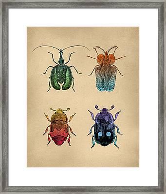 Vintage Beetles Tinted Engraving Framed Print