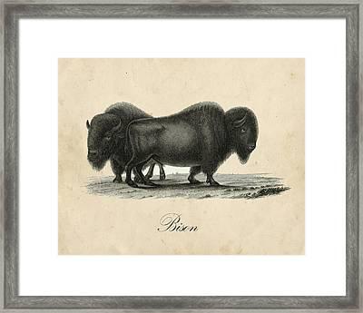 Vintage Bison Framed Print