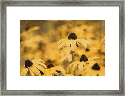 Framed Print featuring the photograph Vintage Black-eyed Susans by Peggy Collins