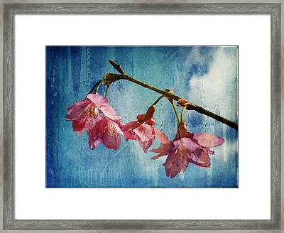 Vintage Blossoms Framed Print by Carla Parris
