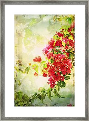 Vintage Bougainvillea San Diego California Framed Print by Marianne Campolongo
