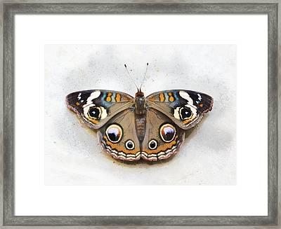Vintage Butterfly Framed Print