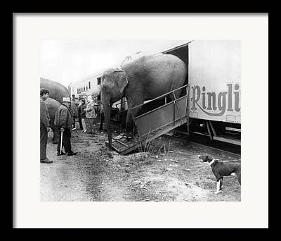 Ringling Brothers Framed Prints