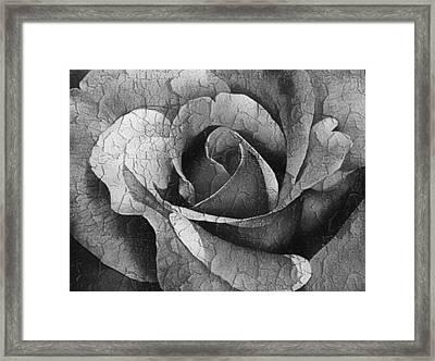 Vintage Cracked Rose Framed Print