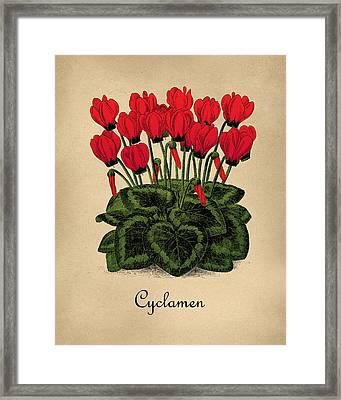 Vintage Cyclamen Botanical Framed Print