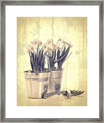 Vintage Daffodils Framed Print by Amanda Elwell