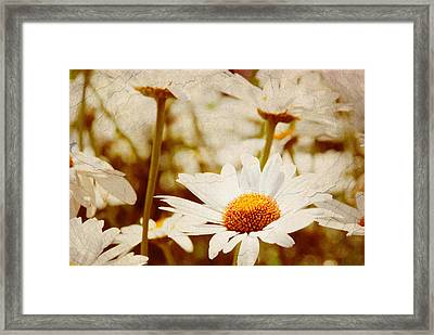 Vintage Daisy Framed Print