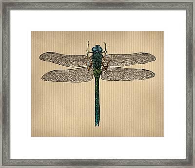 Vintage Dragonfly Tinted Engraving Framed Print by Flo Karp