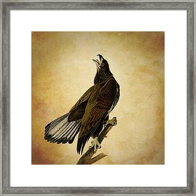 Vintage Eagle Framed Print by Sheila Savage