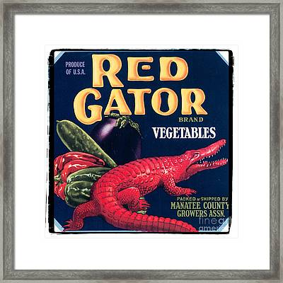 Vintage Florida Food Signs 6 - Red Gator Brand - Square Framed Print by Ian Monk