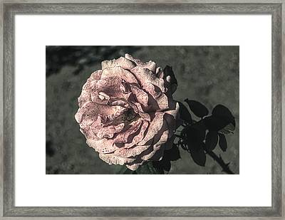 Vintage Flower Framed Print by John Rossman