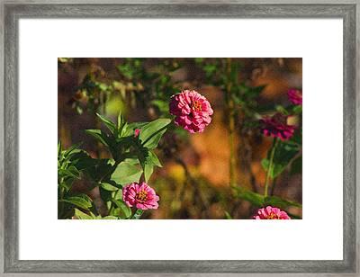 Vintage Flower Framed Print by Rhonda Humphreys
